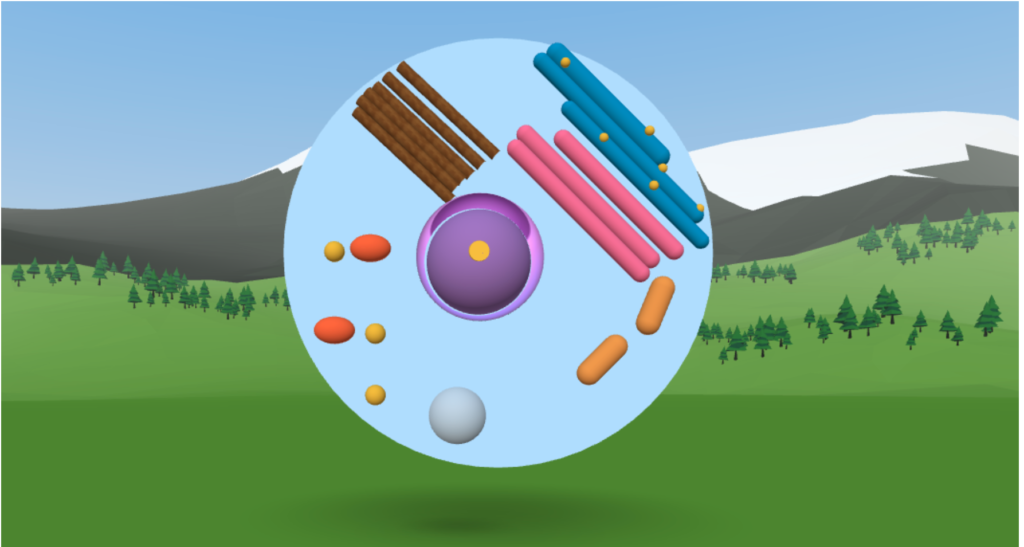 Animation of a virtual cell